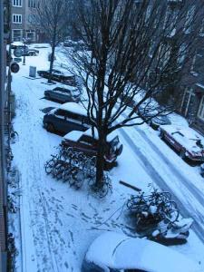 sneuw