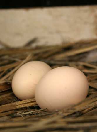 first eggs 2009